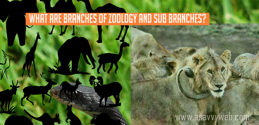 What Are Branches Of Zoology And Sub Branches A Savvy Web