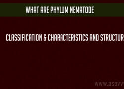 What are Phylum Nematode Classification & characteristics and Structure