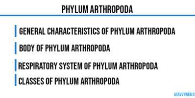 Phylum Arthropoda-characteristics-body-symmentrical-classes