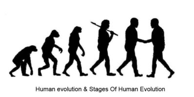 Human evolution & Stages Of Human Evolution