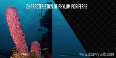 Characteristics of Phylum Porifera