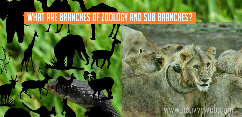 What are Branches of Zoology and Sub-Branches-list