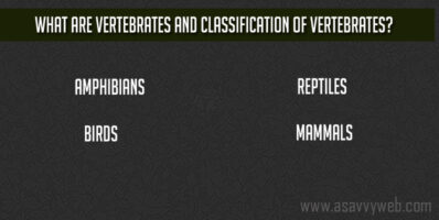 What are Vertebrates and Classification of Vertebrates