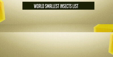 World Smallest Insects List