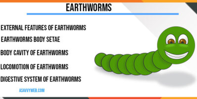 Earthworms-Features, Body Cavity, Nerves System, Digestive System, External Aperture