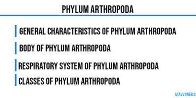 Phylum Arthropoda-characteristics-body-symmentrical-classes