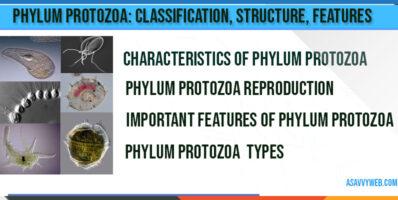 Phylum Protozoa-characteristics-types-classification-shape-reproduction