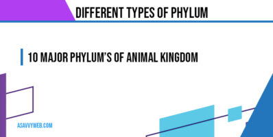 different-types-of-phylum-and-characteristics