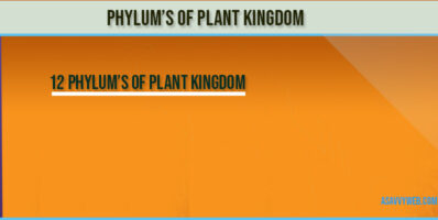 phylums-of-plant-kingdom