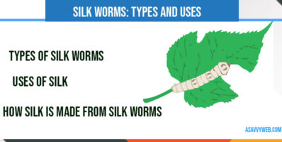 silkworms-uses-and-types