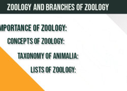 zoology-branches-of-zoology-animalia