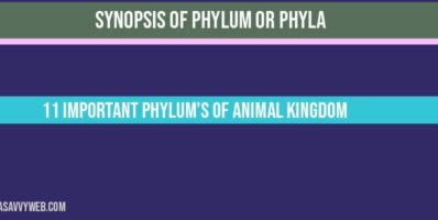 Overview of Phylum or Phyla 11 Important phylum's of Animal Kingdom